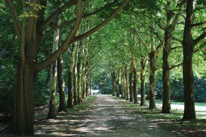 Løpe i skog eller på fjellet? Hvordan velge riktig terrengsko